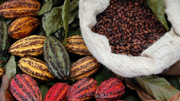 Il cacao contrasta l'Alzheimer