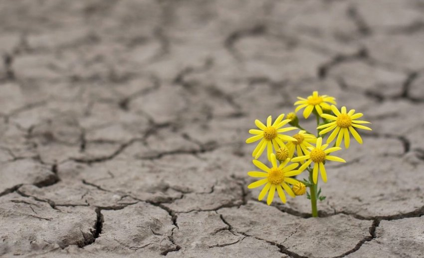 Hope Flower In Dry Lakebed