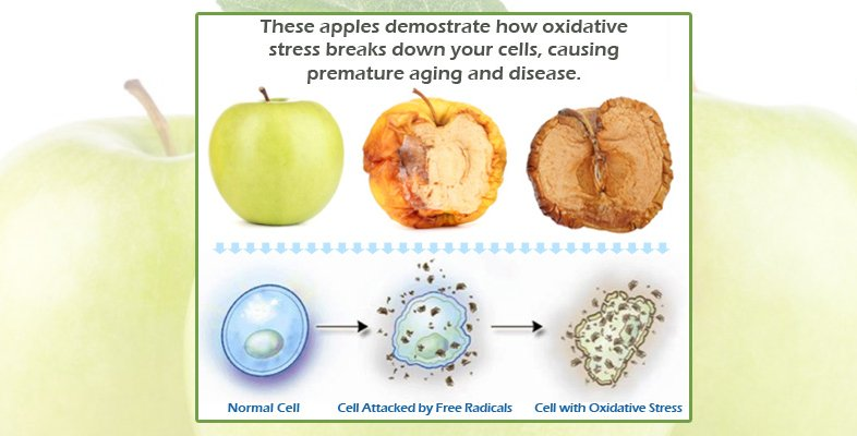 Oxidative Stress in apples and cells